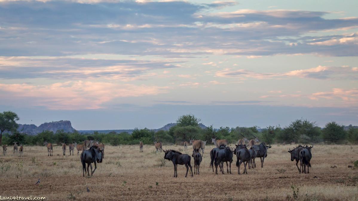 Mapungubwe 5074