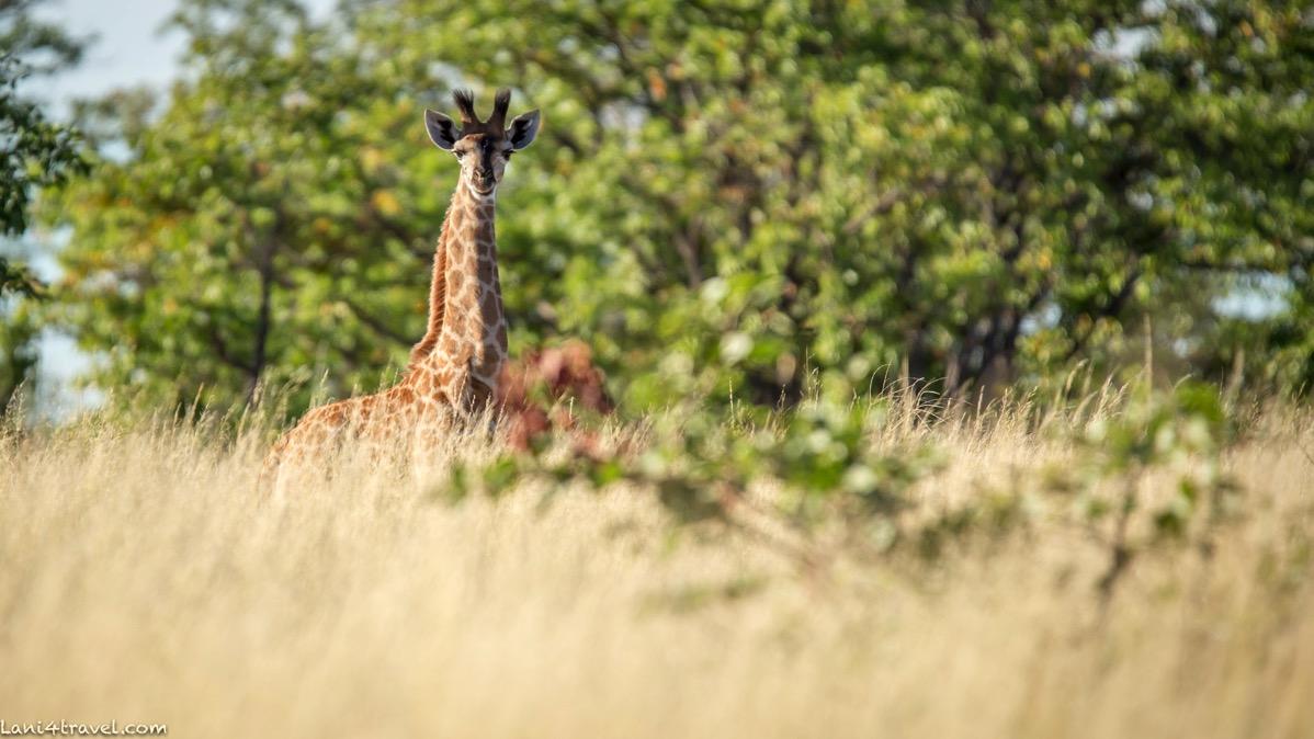 Mapungubwe 5085