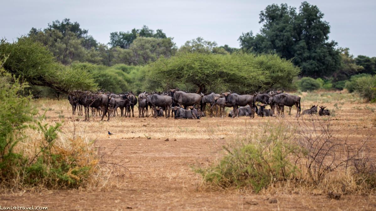 Mapungubwe 5786