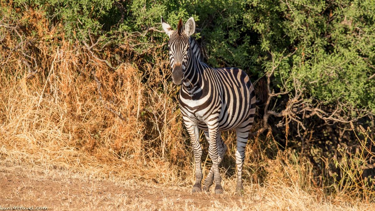Mapungubwe 5856