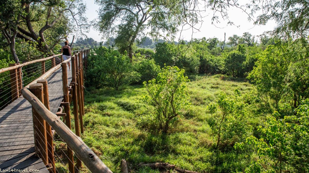 Mapungubwe 5873