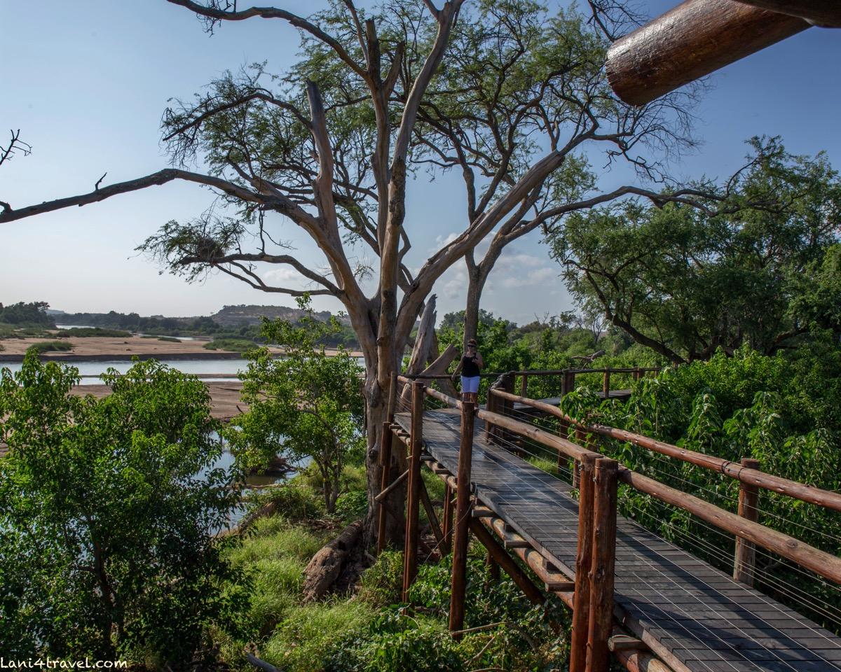 Mapungubwe 5880
