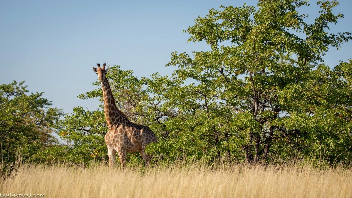 Mapungubwe 6903